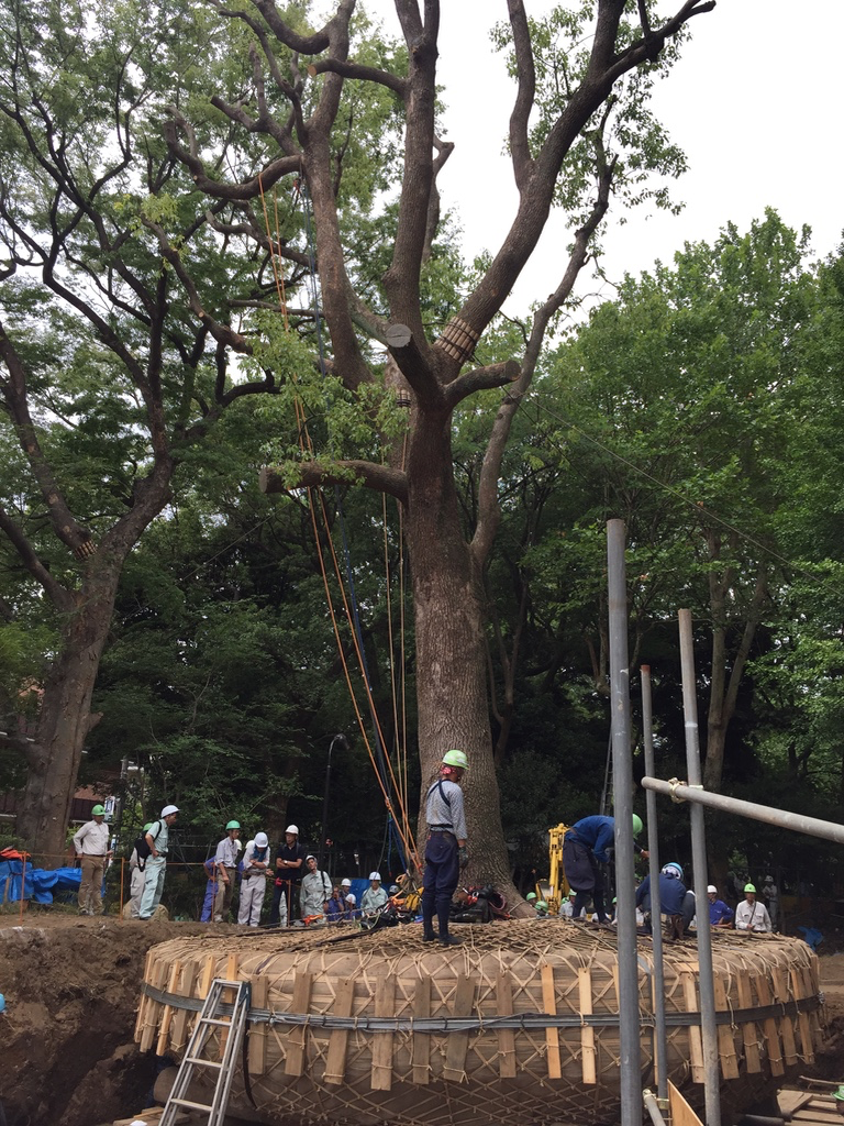 A TREE MOVES IN MINATO-KU by Amy Katoh