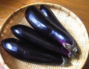 "Autumnal Eggplant  秋茄子 ""aki nasu"""